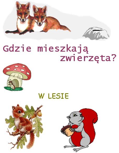 Gdzie Mieszkają Zwierzęta